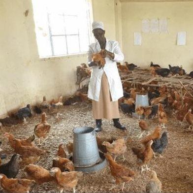woman feeding chickens in closed school